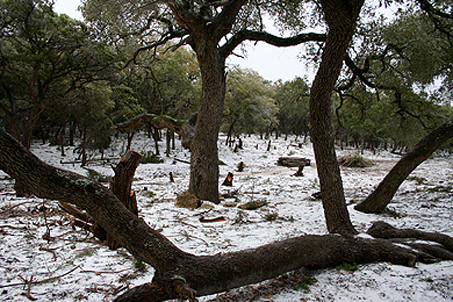 The icy forest of Pipe Creek