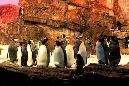 An entire colony of penguins
