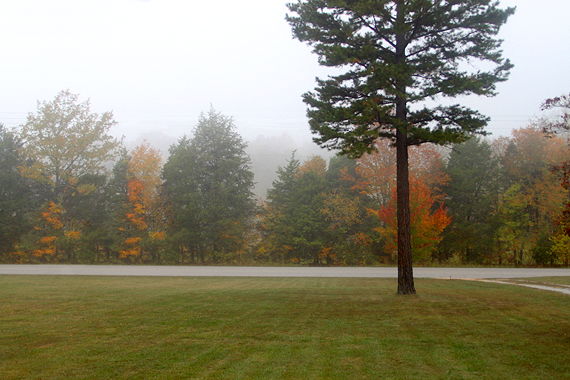 Our front yard in the mid-morning mist of Autumn