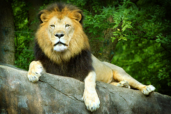 King of the Hill and King of the Jungle